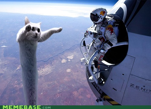 Youtube/funny vids/funny pics page - Page 10 Longcat-scares-felix