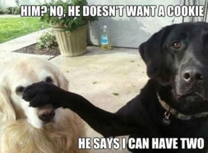 Him-No-he-doesn't-want-a-cookie-he-says-I-can-have-two-555x408